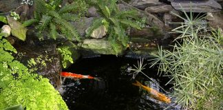build Fish Pond 5 Reasons