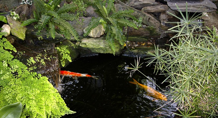 A Fish Pond 5 reasons to build a fish pond