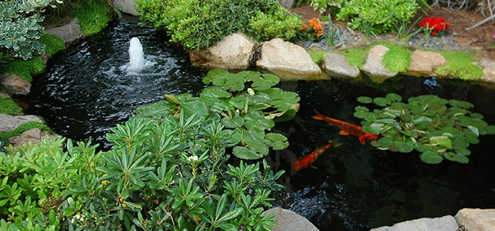 Building Fish ponds like this one