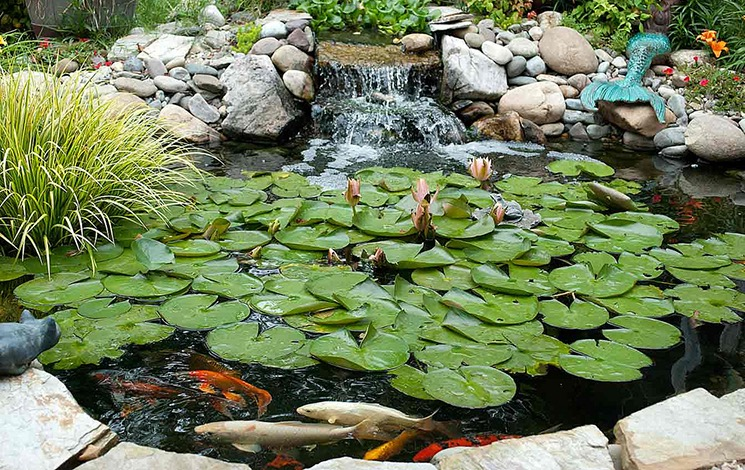 assess your pond supply needs