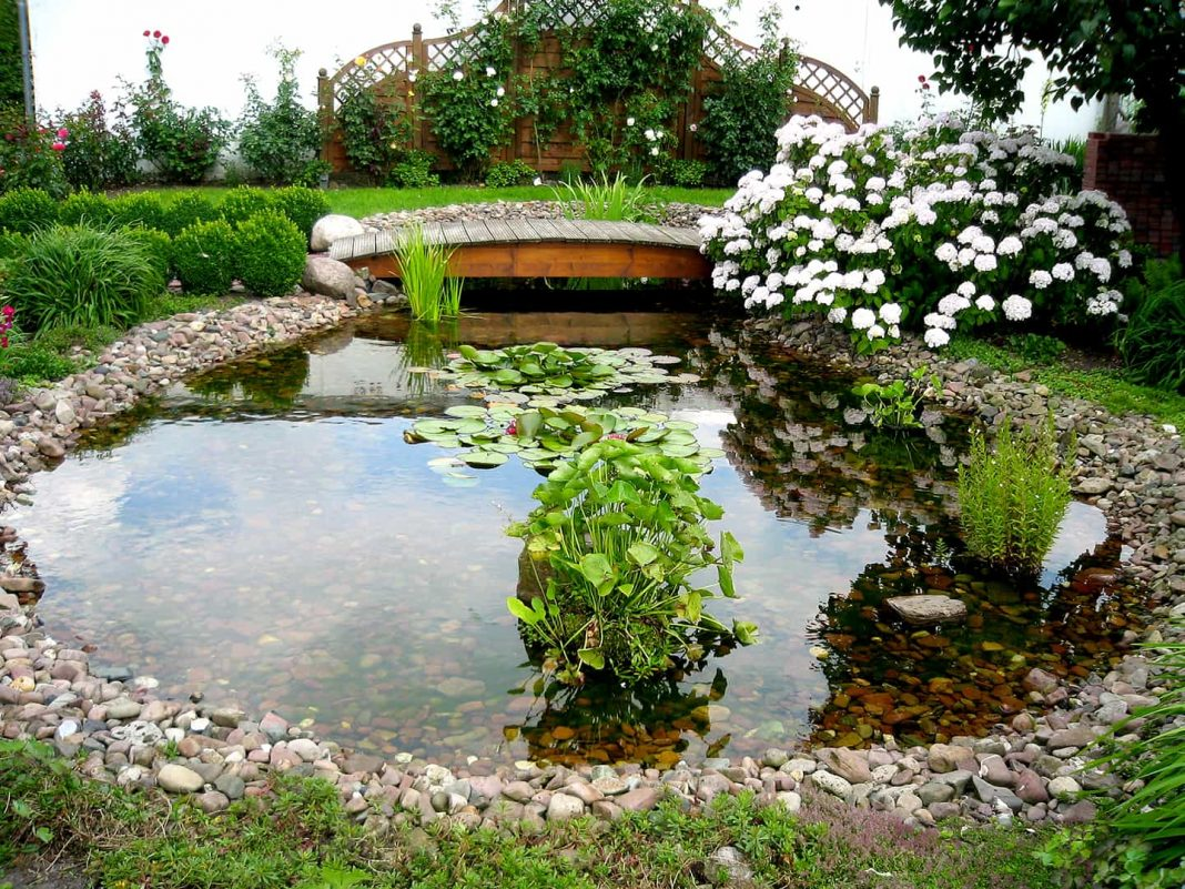 ths best fish pond filter for a cean pond