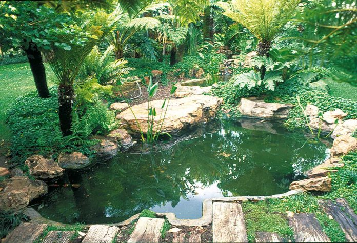 backyard fish ponds