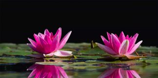 water in pond with lilies S 324x160 - Home