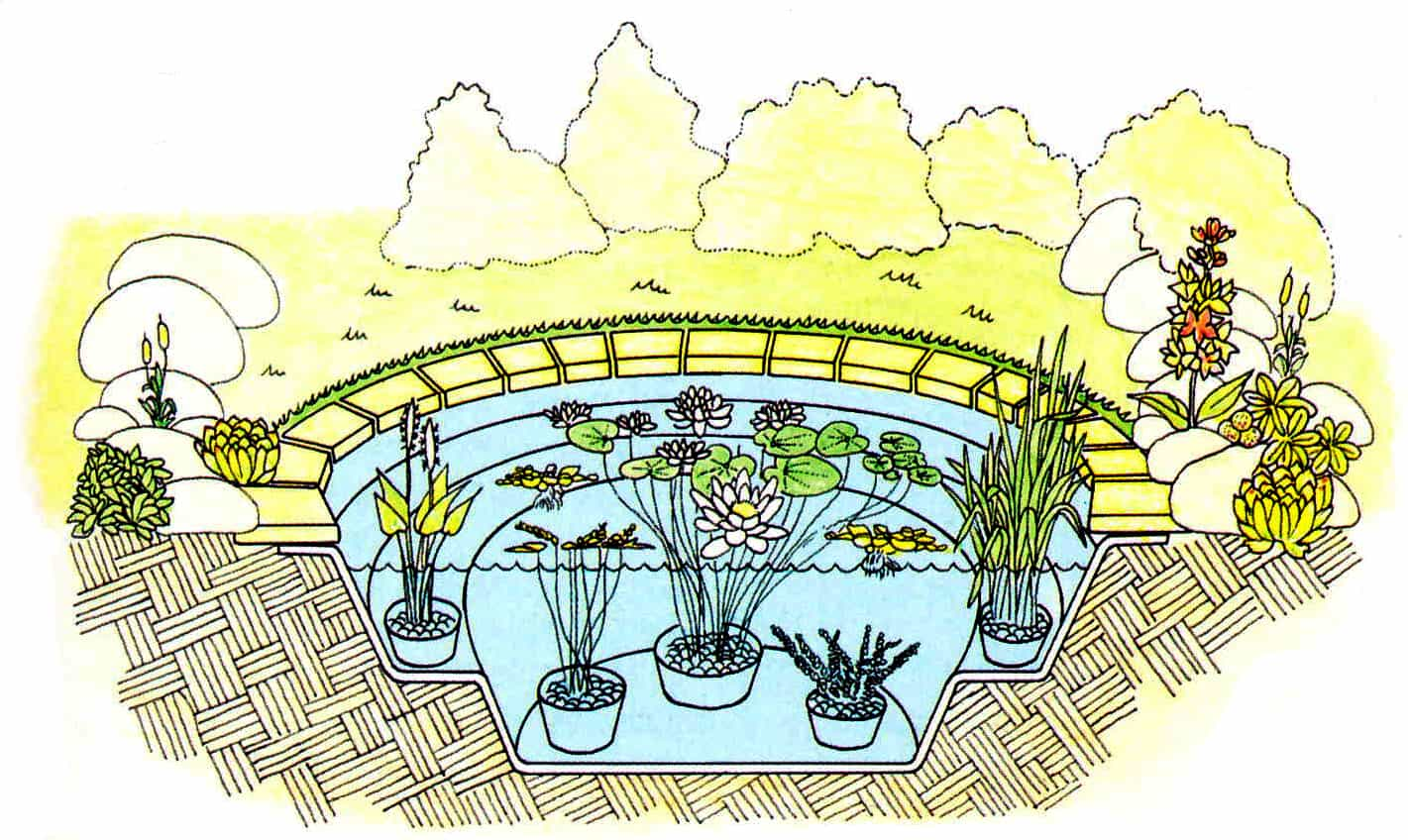 12 Pond plant life - How To Finish Off Your Pond