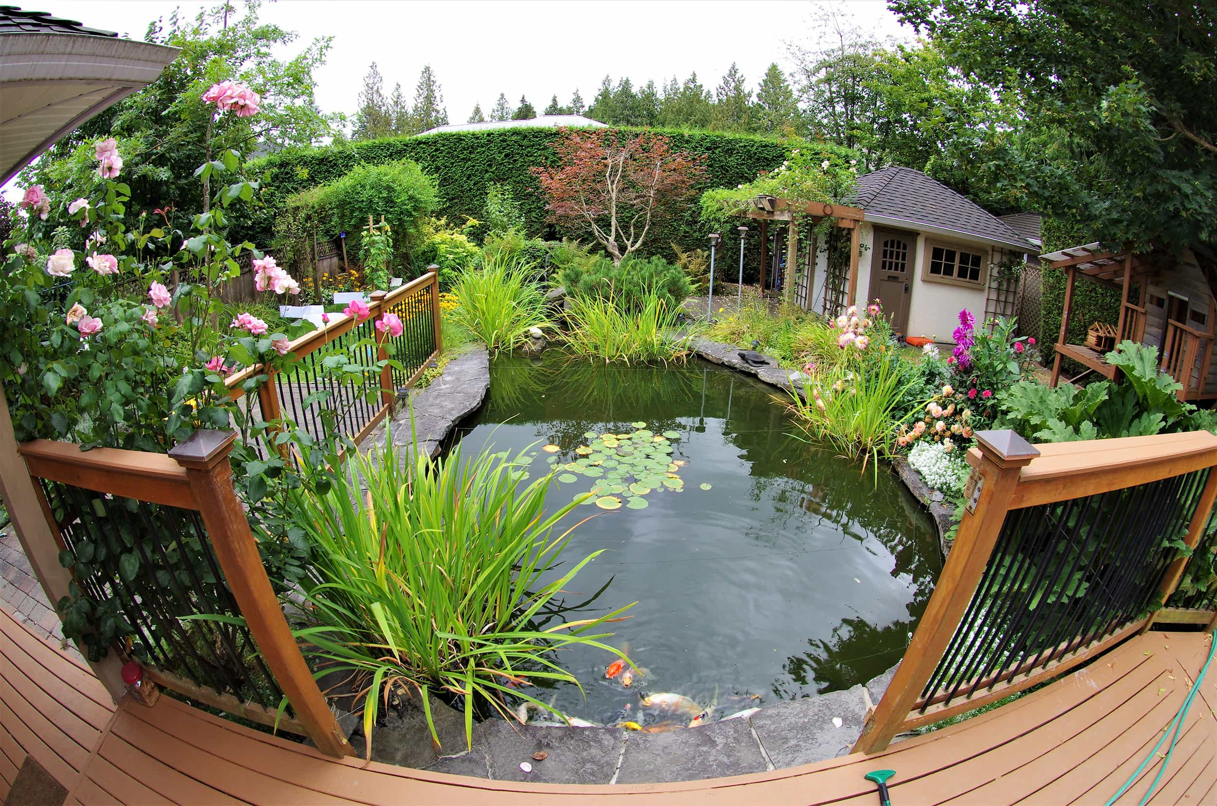 Backyard Koi Pond with plants S - Formal Ponds and Pools