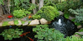 what is the cost of your pond