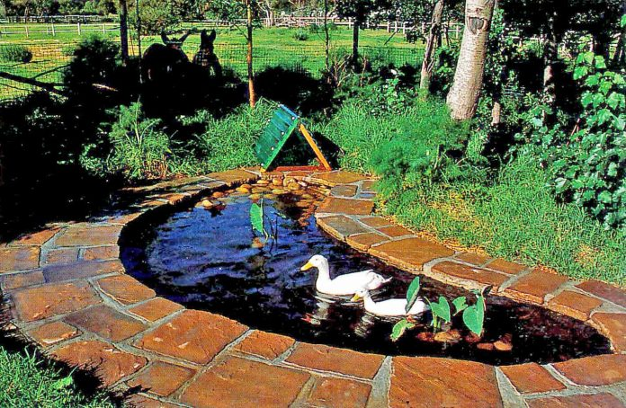 small duck pond