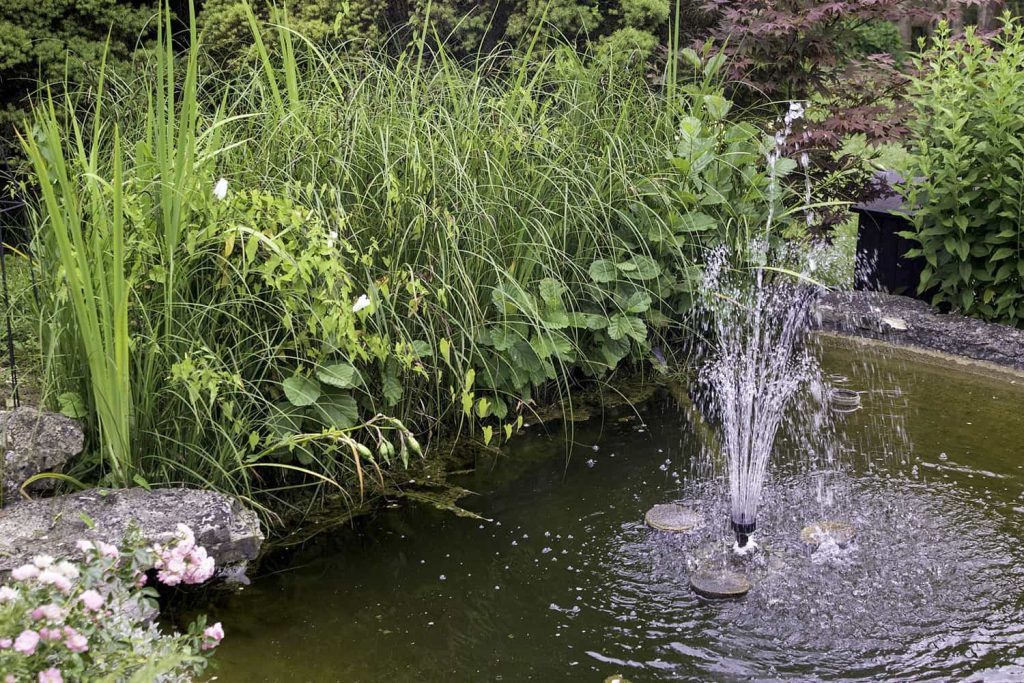 Water fountain in pond